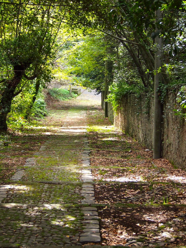 Tree Covered Trail, Frascati, Italy, 2012